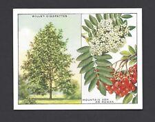 WILLS - TREES - #11 MOUTAIN ASH OR ROWAN