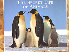 THE SECRET LIFE OF ANIMALS READER'S DIGEST nature natural world survival animal