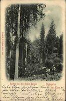 Hohegeiss Hohegeiß Niedersachsen Harz 1901 Dicke Tannen Wald Baum Bäume Tree