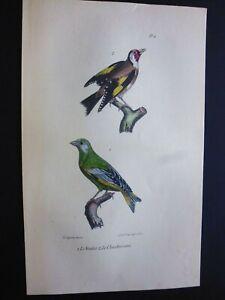 Gravure couleur 19° Buffon:Oiseaux:   le verdier...le chardonneret