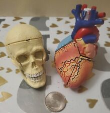 Anatomical Human Heart Amp Skull Model Medical School Educational 4d Can Disassemb