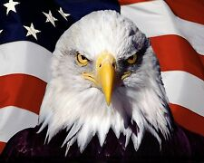 """Patriotic Bald Eagle American Flag- 30"""" x24"""" LARGE WALL POSTER PRINT NEW."""