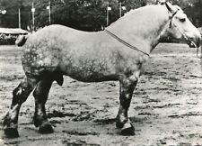 Carte d'un cheval Percheron ? Pub Médicament Soufrane au dos