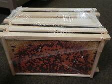 Virtuelles Bienenvolk,10 Zander-Rähmchen,Imker,Imkerei,Lehrmaterial 477x220 mm