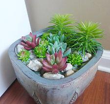 Set of 12 Artificial Mini Grass Succulents(Mix Plants)