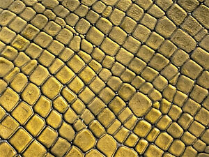 Gold Crocodile Exotic Leather Cow Hide Accessory Wallet Bag Craft 21 Square Feet