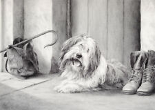 "BEARDED COLLIE BEARDIE DOG ART LIMITED EDITION PRINT - ""Ready and waiting"""