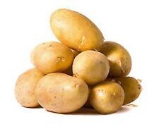 Potato ILONA Seeds organic seeds Ukraine Seeds 0.02g