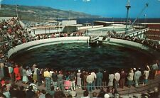 Postcard Marineland of the Pacific Porpoise Feeding Time Los Angeles CA