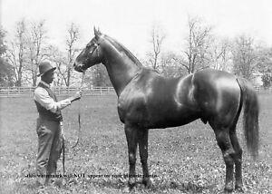 Man o War PHOTO Horse Racing Champion Belmont Stakes Preakness Race Winner