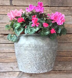 LARGE Vintage Shabby Chic Style Metal Wall Planter Hanging Plant Pot Basket