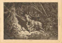 Dog, Attacks The Wounded Deer, Life & Death, Vintage 1878 French Antique Print