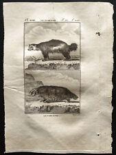1799 - Buffon - Le glouton, le Carcajou - Gravure zoologie