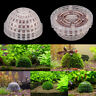 transparent aquarium fish tank natural media moss ball live plant filter decorZF