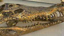amazing large Crocodile skull solid brass large heavy decoration stunning 50cm B