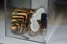 ODDITY GERMAN MWMT MQ Authenticated TY beanie baby Stripes Fuzzy 3rd 1st gen