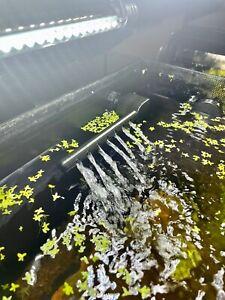 Fluval Flex Spray Bar, Water Agitation, Better Water Distribution.