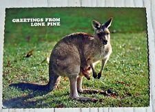 Post Card. GREETINGS FROM LONE PINE. Kangaroo