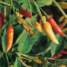HOT CHILLI PEPPER - TABASCO 10 Seeds - Liveseeds