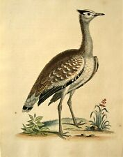 GEORGE EDWARDS ORIGINAL HAND COLORED BIRD ETCHING: PLATE 12: LONDON, 1741