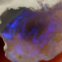 Lightning Ridge Opal with Blue Purple Fire NSW Australia Unpolished 3.5ct 13mm