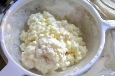 Leche orgánicos saludables y potentes Kefir granos 2 cucharas con líquido de arranque