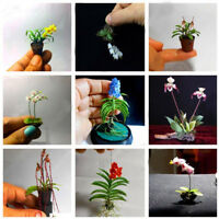 WO_ 100PCS Rare Mini Orchid Seeds Seed Flower Phalaenopsis Indoor Miniature Gard