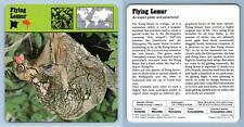 Flying Lemur - Mammals - 1970's Rencontre Safari Wildlife Card