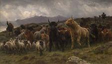 Highland Raid Rosa Bonheur Ziegen Rinder Schottland Vieh Tiere Hirte B A3 03193