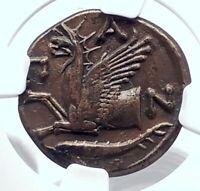 PANTIKAPAION BOSPORUS 310BC RARE R1 Ancient Greek Coin PAN & GRIFFIN NGC i80121
