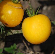 graines de tomate pêche jaune vendu en sachet de 30 graines