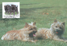 Finland 1998 FDC - Maxi Card no. 39 Dogs - Cairnterrier