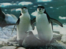 3D Lenticular Poster - Penguins with Chicks - 10x14 Print - Marine Animals