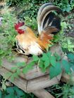 12 Serama Chicken Hatching Eggs  From Chickweed Farms, Micro to A-B sizes NPIP