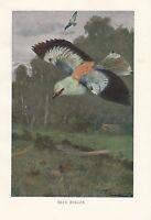 C1914 Naturel History Imprimé~ Bleu Rouleau ~ Lydekker
