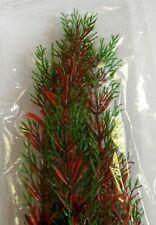 Kunststoffpflanze Egeria sp. 47cm / Wasserpflanze Aquarium Künstliche Pflanze