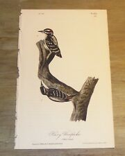 Birds of America.  Audubon. Hairy Woodpecker. 1st ed.