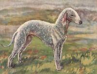 Original 1934 Colour Dog Print / Bookplate - BEDLINGTON TERRIER, RF2