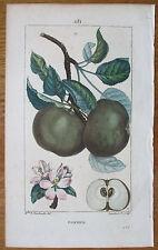 Chaumeton Original Colored Print Botany Apple - 1814