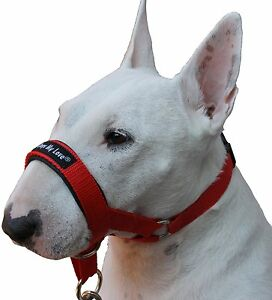 Dog Head Collar Halter Red 6 Sizes