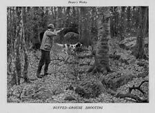 HUNTING RUFFED GROUSE SHOOTING BY A. B. FROST POINTER DOG HUNTER TAKES SHOT