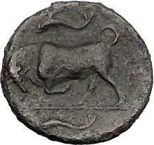 SYRACUSE in SICILY 317BC Agathokles Persephone Bull Ancient Greek Coin i56206