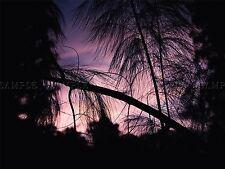 Composition photo silhouette PINS violet ciel asiatique Poster Print bmp10288