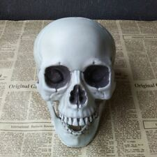 Scary Simulation Skull Decoration Statue Skull Model Skeleton Figurine for Party