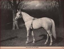 Trotting HORSE, Famous Sire, PILOT MEDIUM, by George Ford Morris, vintage 1952