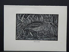 BIRDS, ERIC FITCH DAGLISH, Engraving, c. 1948 Great Snipe #38