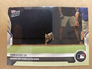 Courageous Cat - 2021 MLB Topps Now Card #608 🐈 Print Run: 3836 🐈 Yankees
