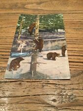 Old  Postcard .  Bern Bears