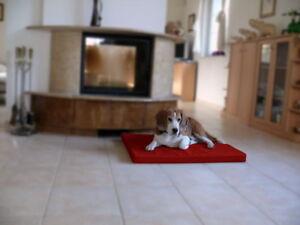 MARLEY Orthopädisch Hundematraze Hundebett Hundematte Kunstleder 7cm