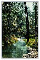 Rochester, NY New York Scene in Palmer's Glen Postcard Posted 1911
